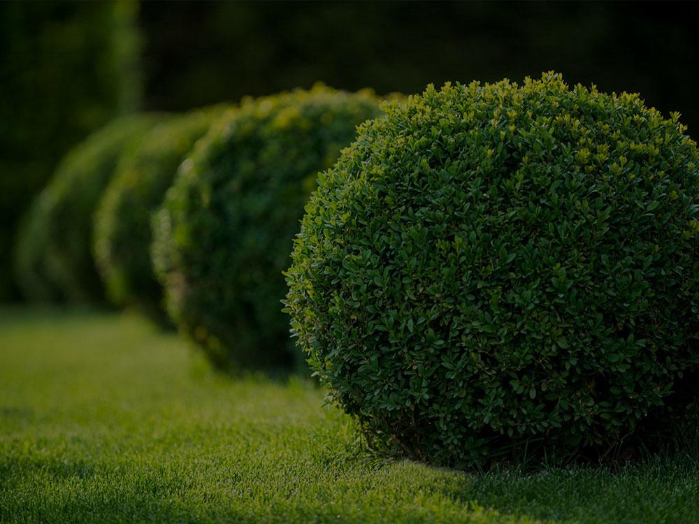 Hoover Landscaping