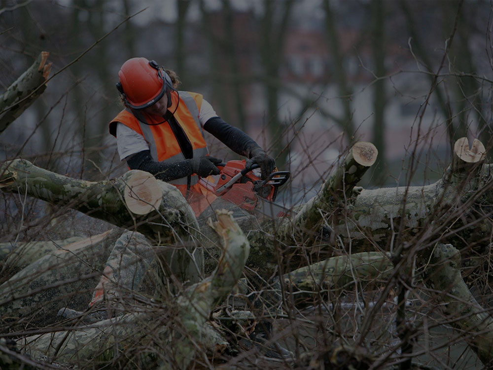 Hoover Tree Removal
