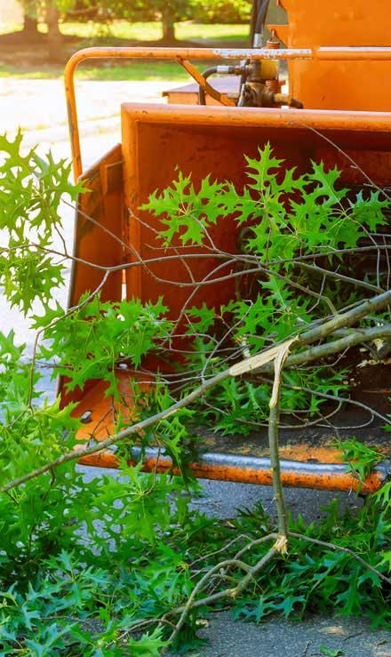 Alabama Greenscapes, LLC Tree Trimming